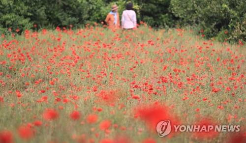 제주 관광 기지개 펴나…입도 관광객 3만명 근접