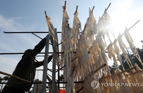 A fisherman displays squid under the sunlight in Uljin, a coastal county in North Gyeongsang Province, located some 330 km southeast of Seoul, in this file photo taken on Nov. 2, 2017. (Yonhap)