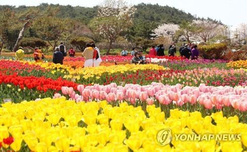 태안 세계튤립 꽃 축제