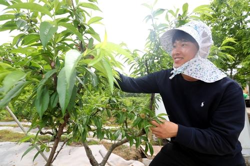복숭아밭 가꾸는 청년 농업인 최영씨