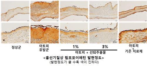선퇴 추출물 투여군에서 염증성 사이토카인 감소 효과