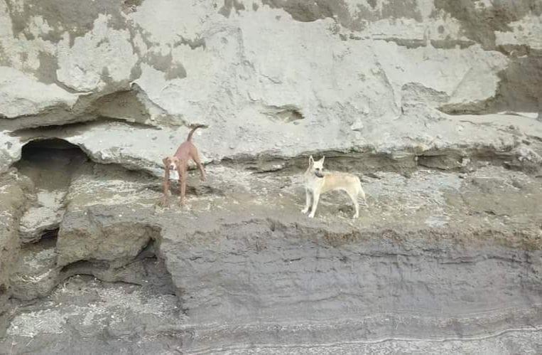 싱크홀에 빠진 개 두 마리의 모습