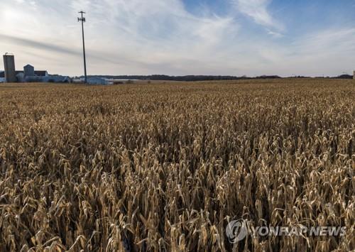 미국 일리노이주에 있는 옥수수밭 모습 [EPA=연합뉴스 자료사진]