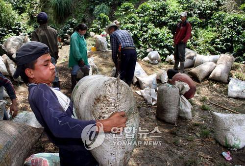 [EPA=연합뉴스 자료사진] 커피 자루를 운반하는 콜롬비아 농부