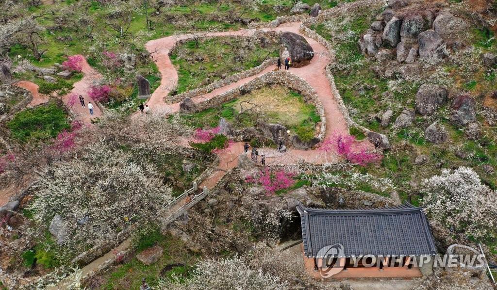 봄이 온 매화마을
