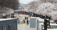 Popular spring blossom festivals canceled over coronavirus fears