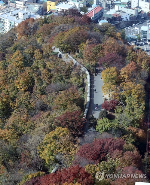 Autumn leaves in Seoul