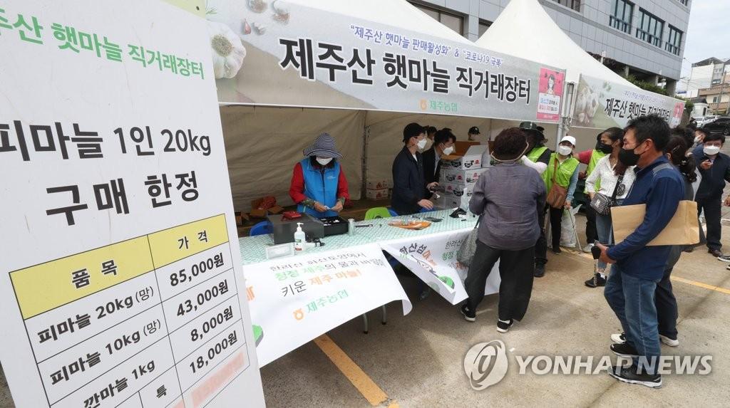 제주산 햇마늘 직거래 장터 '인기'